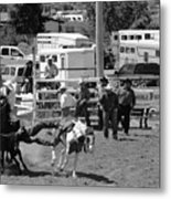 Steer Wrestling Metal Print
