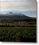 Stellenbosch Vineyard Metal Print