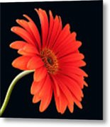 Stemming Beauty Metal Print