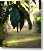Step Into The Garden Metal Print