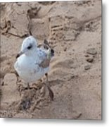 Step Right Up Metal Print