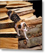 Stepping Down - Calico Cat On Beech Woodpile Metal Print