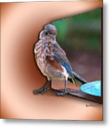 Stepping Out Into The Spotlight Metal Print by Sue Melvin