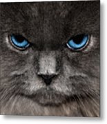 Stern Kitty Metal Print