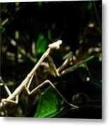 Stick Insect Metal Print