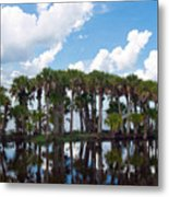 Stick Marsh In Fellsmere Florida Metal Print
