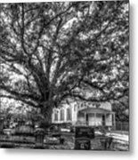 Still Faithful B W God Bethany Presbyterian Church The Old Oak Tree Greene County Georgia Art Metal Print