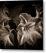 Still. Life. Colorless. Flowers. Metal Print