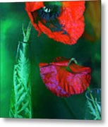 Still Life With Poppies. Metal Print