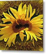Still Life With Sunflower Metal Print