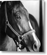 Horse And Stillness Metal Print