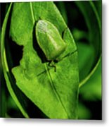 Stink Bug On Leaf Metal Print