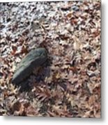 Stone And Leaves Metal Print