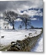 Stone Fence, Weardale, County Durham Metal Print