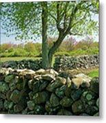 Stone Wall In Rhode Island Metal Print