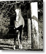 Stopping For A Pose - Southern Indiana Metal Print