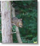 Stopping For A Snack Metal Print