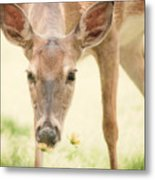 Stopping To Smell The Flowers Metal Print