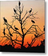 Storks In The Evening Sun Light Metal Print