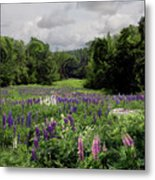 Storm In The Lupine Metal Print