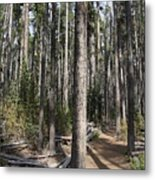 Storm Point Trail Forest Metal Print