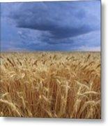 Stormy Wheat Field Metal Print