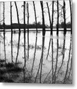 Stranded Trees II Metal Print