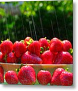 Strawberries And Summer Showers Metal Print