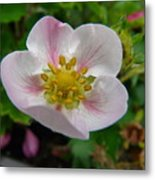 Strawberry Blossom Metal Print