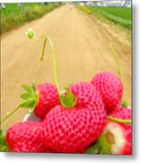 Strawberry Road Metal Print