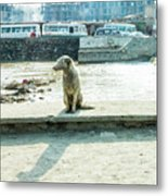 Stray By The River Signed First Edition Metal Print