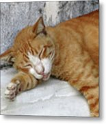 Stray Cat Sleeps On The Floor-1 Metal Print