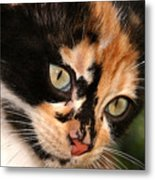 Stray Kitten Metal Print