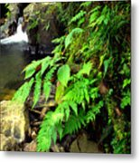 Stream El Yunque National Forest Metal Print
