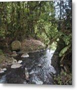 Stream In  Rainforest Metal Print