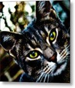 Street Cat II Metal Print