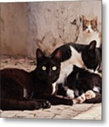 Street Cats - Portugal Metal Print