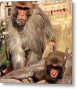 Kathmandu Street Monkeys  Metal Print