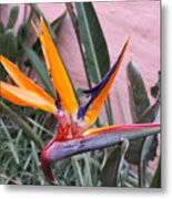 Strelitzia Double Bloom Metal Print