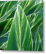 Striated Greens Metal Print