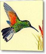 Stripe Tailed Hummingbird Metal Print