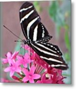 Striped Beauty - Butterfly Metal Print