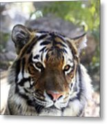 Striped Beauty Metal Print