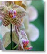 Striped Orchid 1 Metal Print