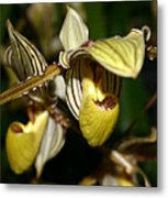 Striped Orchid Metal Print