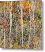 Stripped Bare To The Bark Metal Print