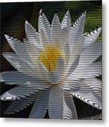 Stripped Waterlily Metal Print