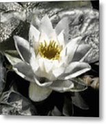 Strokes Of The Lily Metal Print