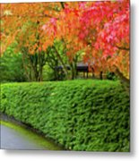 Strolling Path Lined With Japanese Maple Trees In Fall Metal Print