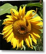 Strolling Through The Sunflowers Metal Print